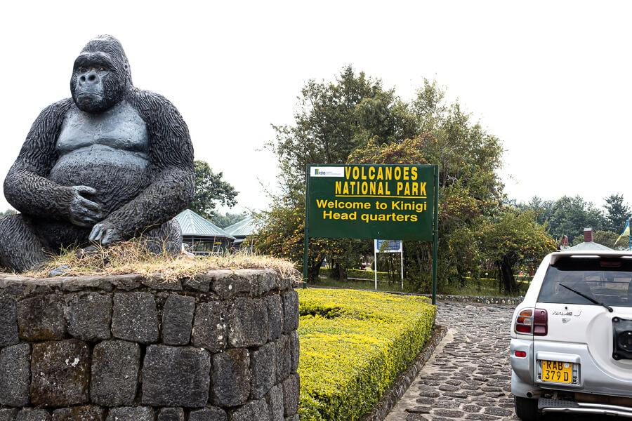 Volconoes National Park Rwanda Gorilla trekking
