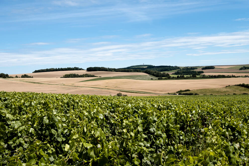 Landscape France Champagne Region