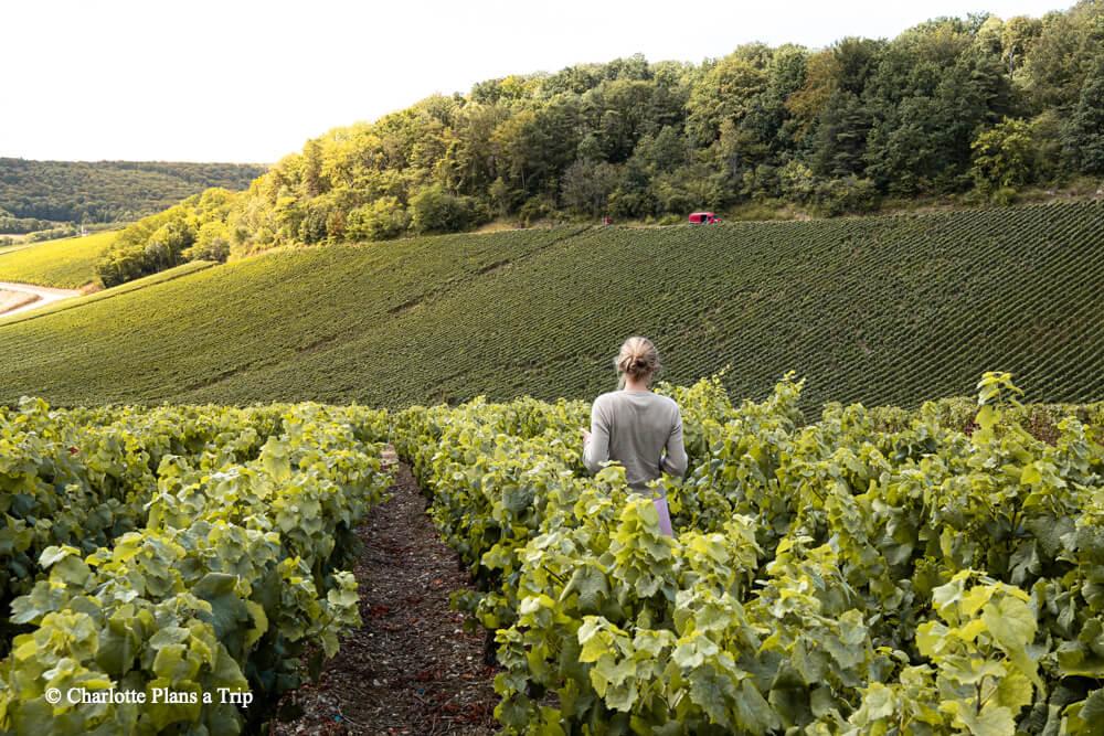Strolling down the vinyards France Visitng France