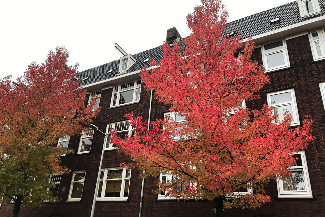 Fall in Amsterdam houses of Amsterdam Netherlands