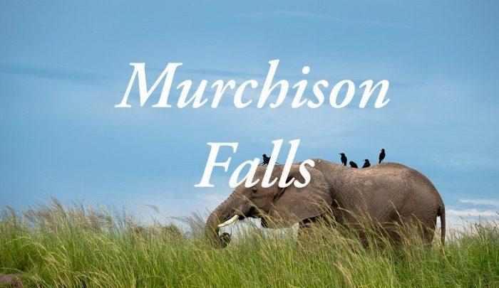 Alles over een safari in het Murchison Falls National park in Oeganda!