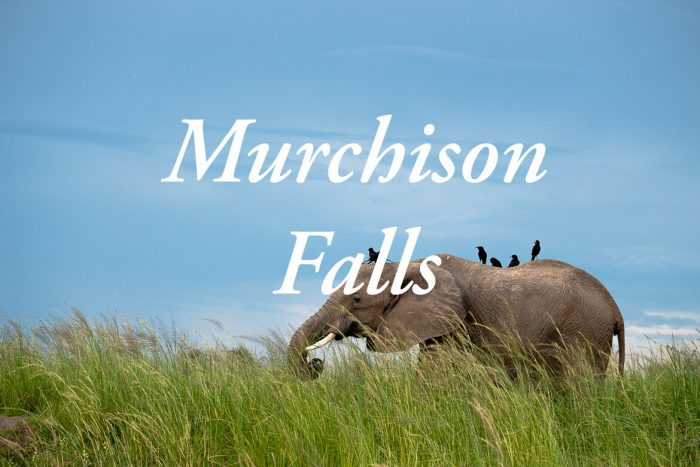 Alles over een safari in het Murchison Falls National park in Oeganda!