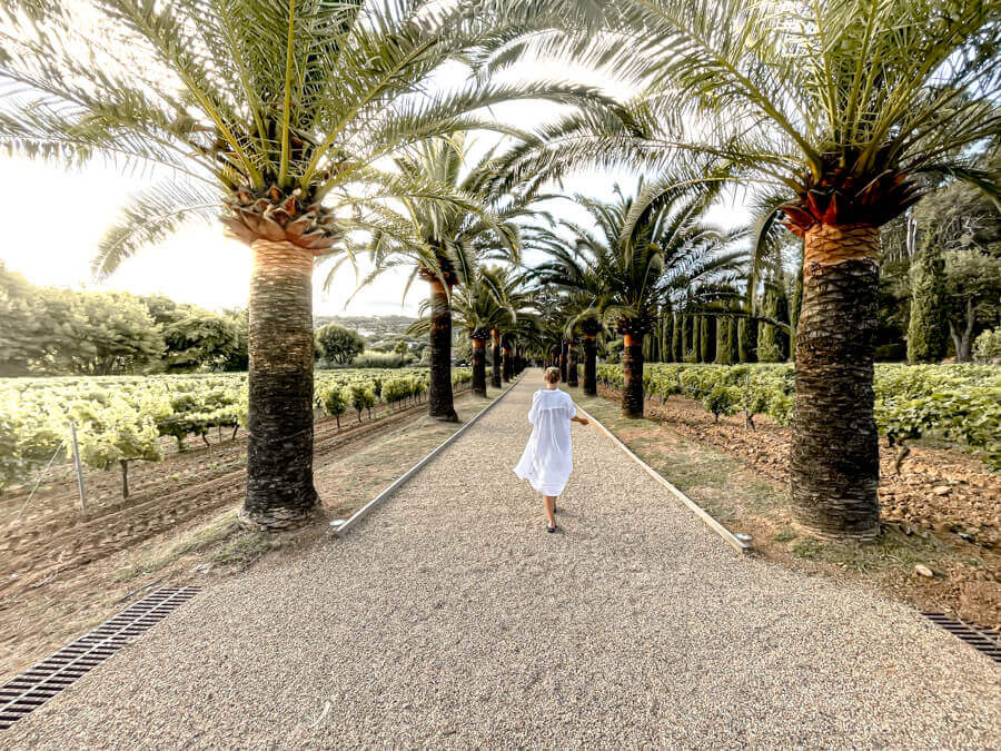 Endless palmtrees in Cote dAzure French